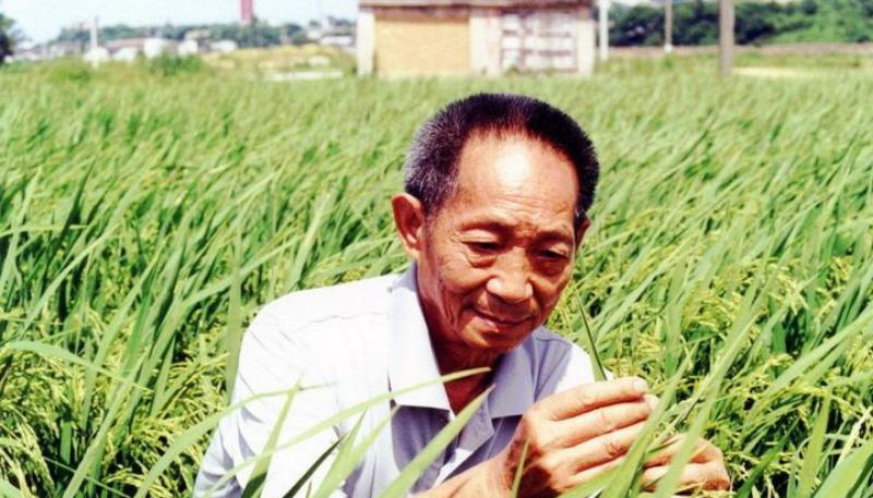China's 'father of hybrid rice' Yuan Longping passes away  'ఫాదర్ అఫ్ హైబ్రిడ్ రైస్' గా పిలువబడే చైనాకు చెందిన యువాన్ లాంగ్పింగ్ మరణించారు  _40.1