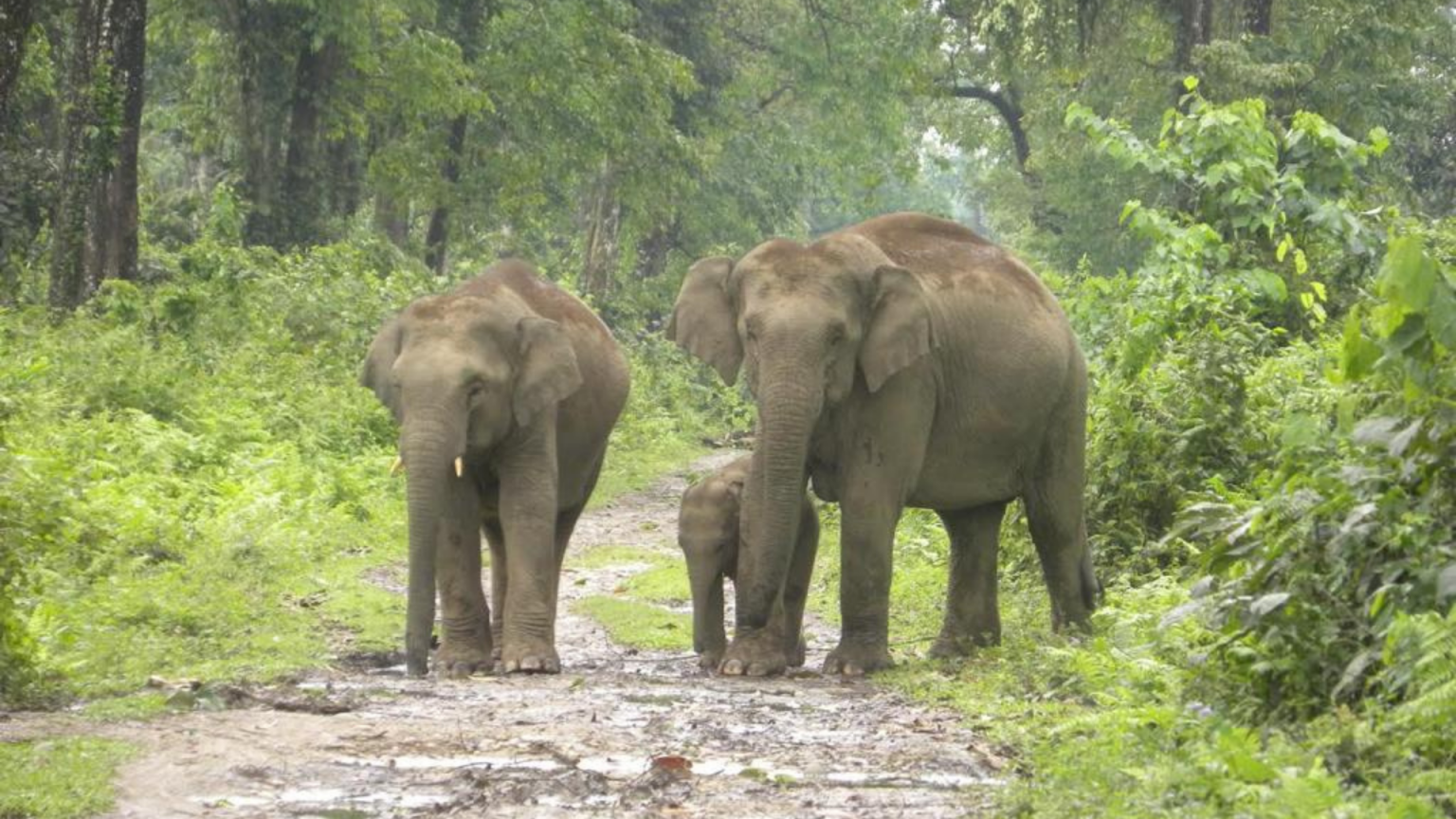 Assam gets its seventh national park with Dehing Patkai | దేహింగ్ పట్కాయ్ వన్యప్రాణుల అభయారణ్యాన్ని 7వ జాతీయ ఉద్యానవనంగా ప్రకటించిన అస్సాం |_40.1