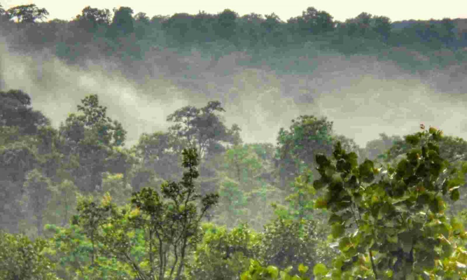 Chhattisgarh becomes 1st state to recognise Forest Resource Rights in Urban Region |_40.1
