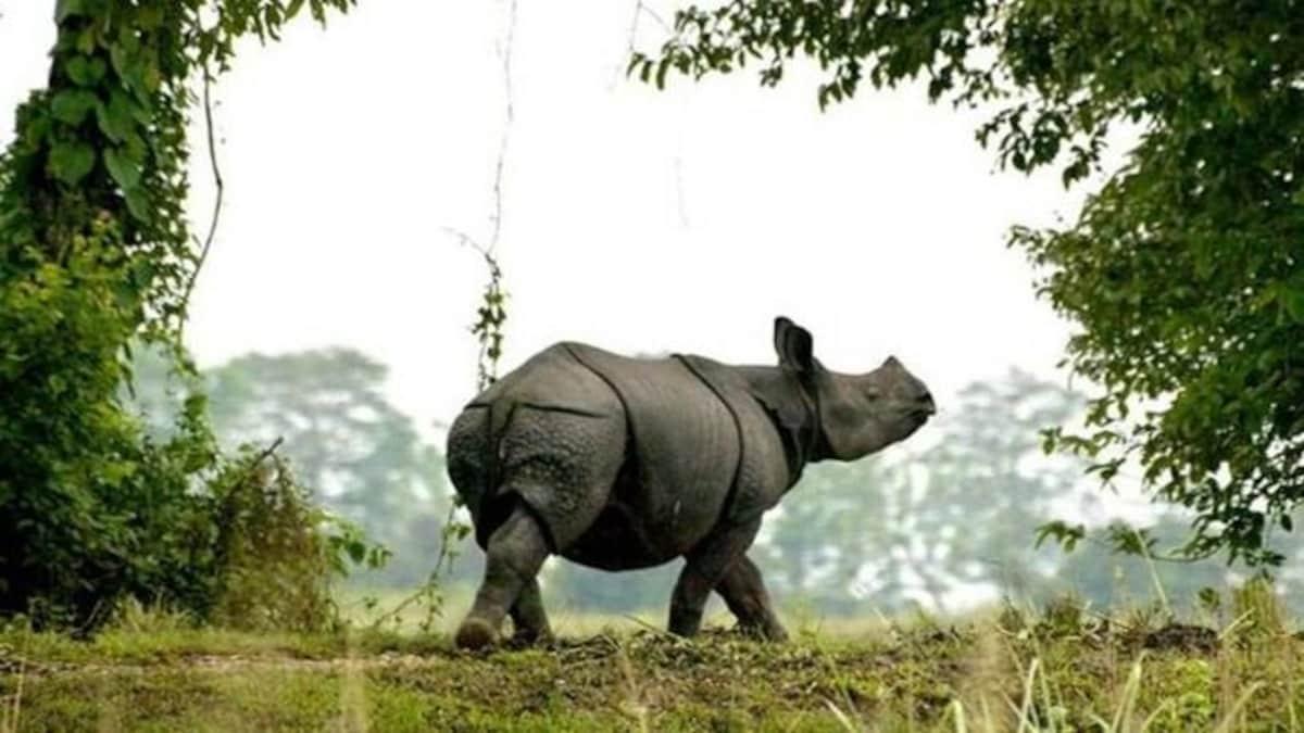 India's first national park with satellite phones | శాటిలైట్ ఫోన్లతో కూడిన మొదటి జాతీయ ఉద్యానవనంగా కాజిరంగ అవతరించింది |_40.1