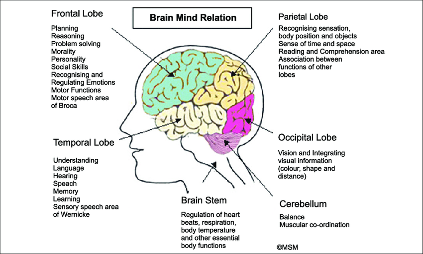 Brain and Emotions: Download Child Pedagogy Study Notes Free PDF For REET Exam_70.1
